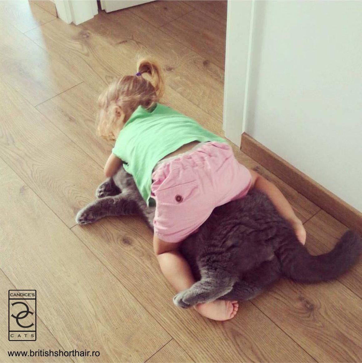 copiii și pisicile