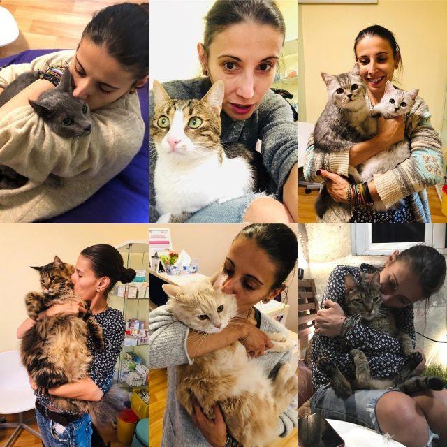 Rocsana Timotin, doctoriţa pisicilor. Veterinarul care a renunțat la stomatologie pentru a găsi leac suferinței oricărei feline