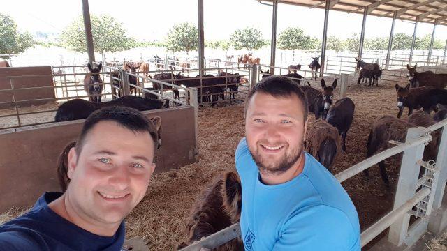 Ferma măgăriţelor, afacerea apărută după o analiză de 24 de ore. Cum reuşesc 2 fraţi din Bihor să vândă un litru de lapte cu 140 de lei