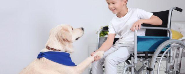 """Dogtors, super-cățeii ,,asistenți medicali"""". Terapia asistată de câine, o poveste scrisă din drama personală a unei fiice"""
