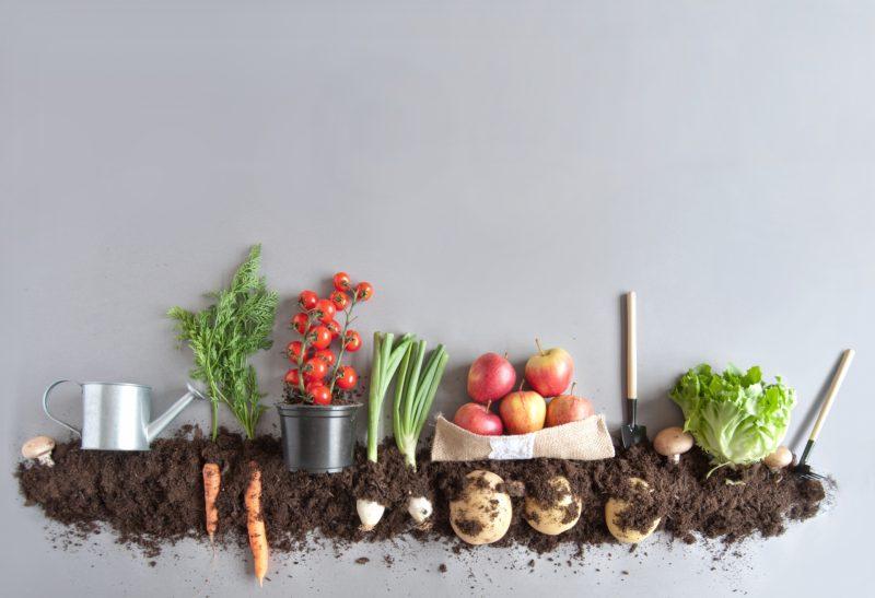 Sfaturi pentru un stil de viață eco friendly