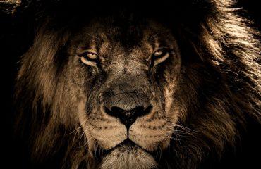 Portalul Leului