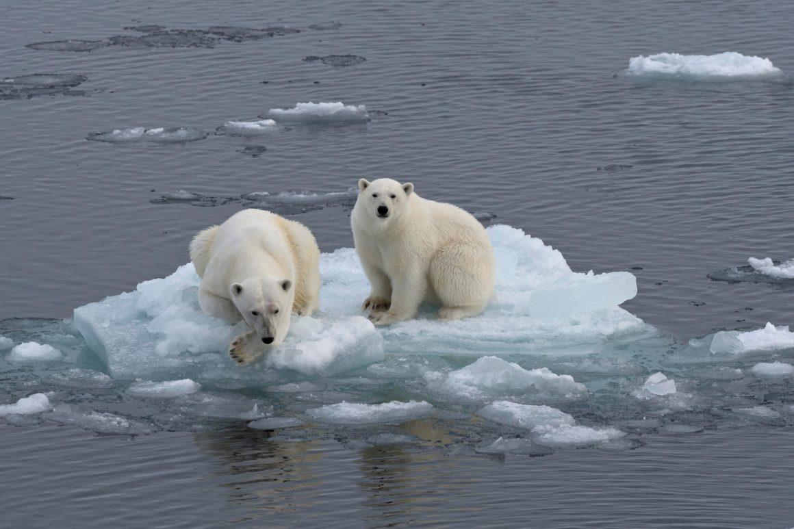 efectele încălzirii globale
