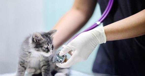 Accidente vasculare la animale