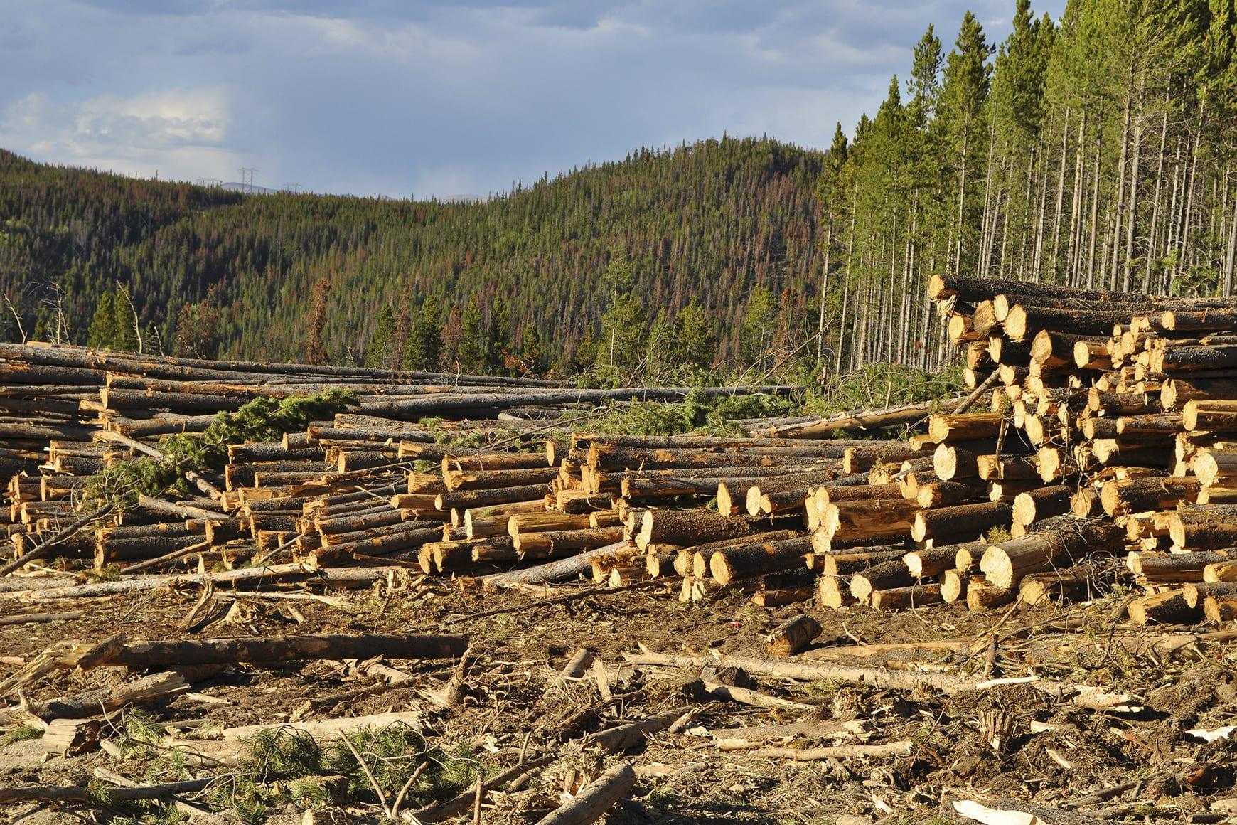 nou centru de pierdere în greutate din pădure)